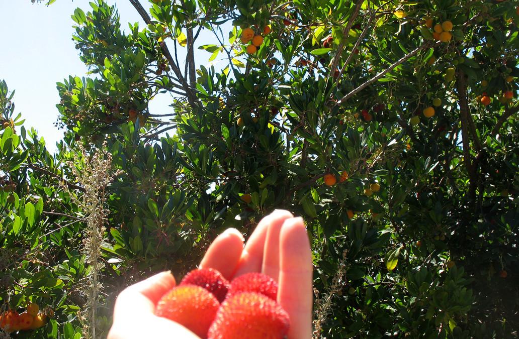 Strawberry Tree Fruit Smoothie