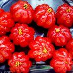 big Surinam Cherries
