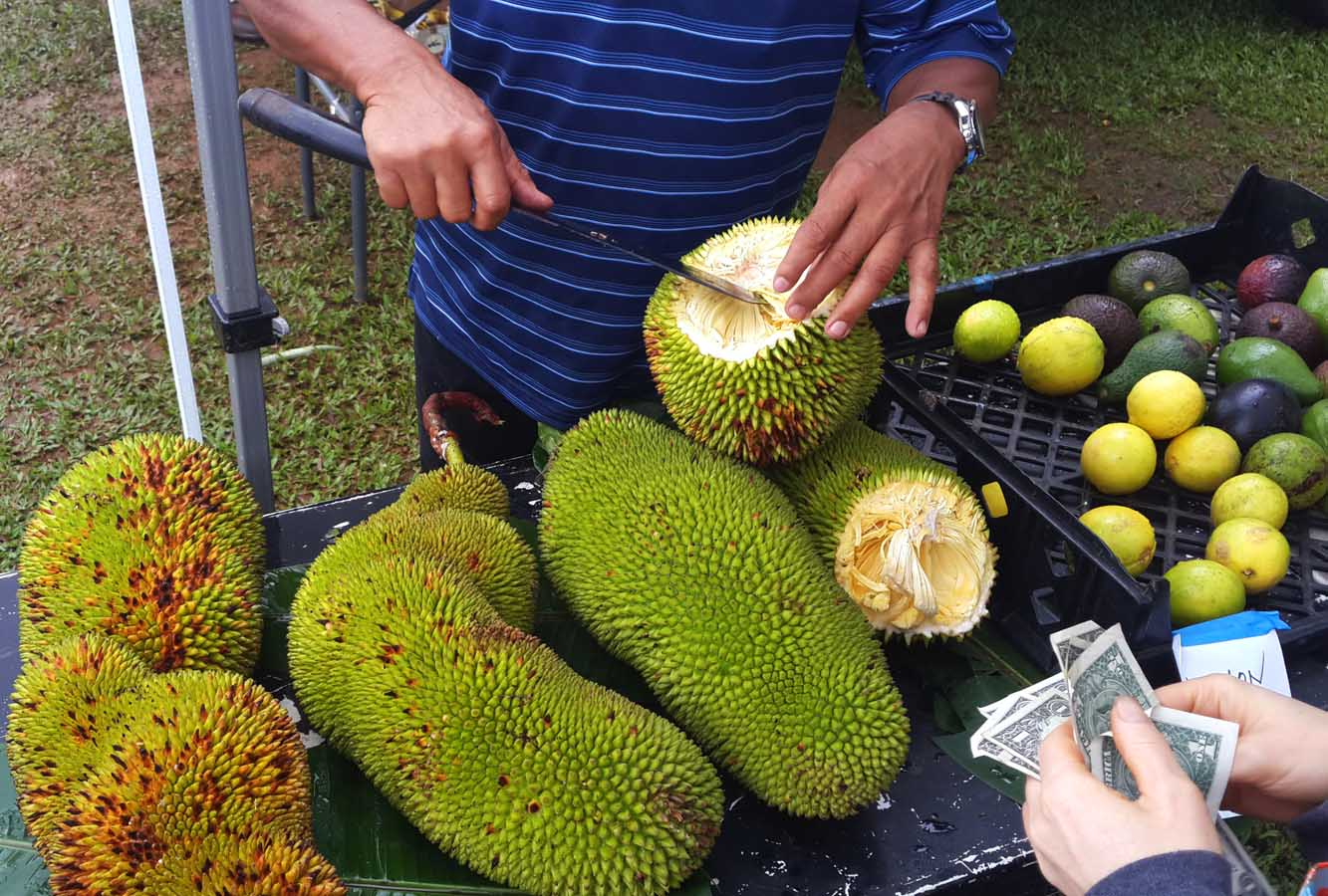 how to cut jackfruit from tree